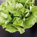 Richtig Spaß macht das Experimentieren mit verschiedenen Salatsorten.